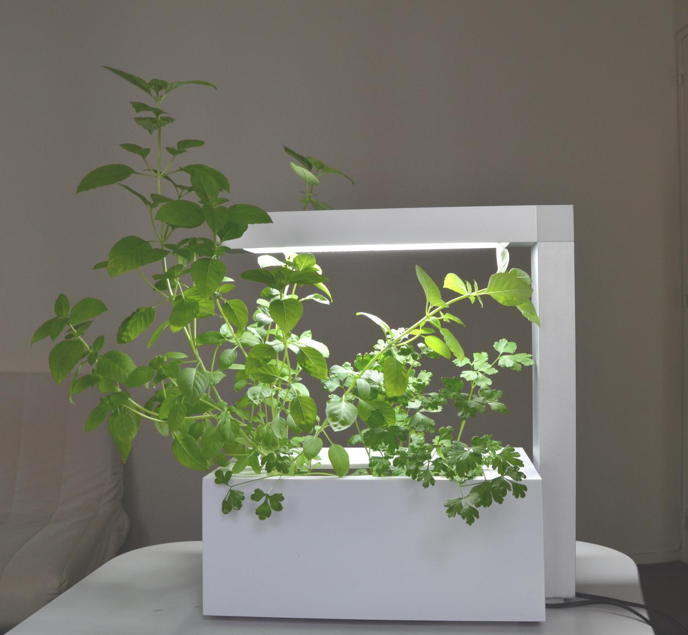 Faire Pousser Du Persil En Appartement jardinage intérieur.fr - le blog | retrouvez tous nos