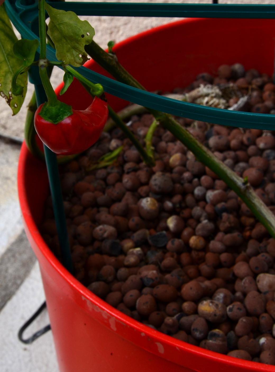 bac pour plante grimpante